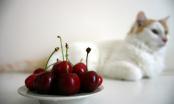 Nutrición en la especie felina (Adultos y Sénior)