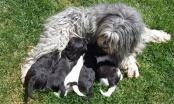 Cuidados de los cachorros (I)