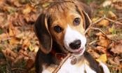 Nutrición en la especie canina (cachorros y adultos)