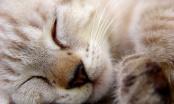 Nutrición en la especie felina (Cachorros)